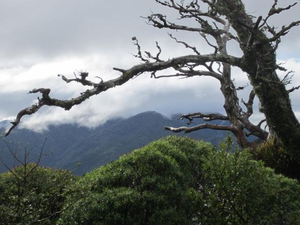 Aorangi Range: before the descent to Washpool