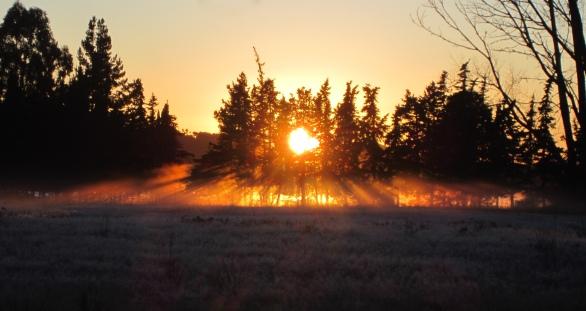 Morning in Abel Tasman