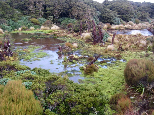 Boggy tarns up top of Cone