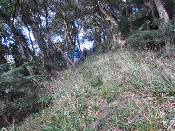 Foresty times in the Tararuas
