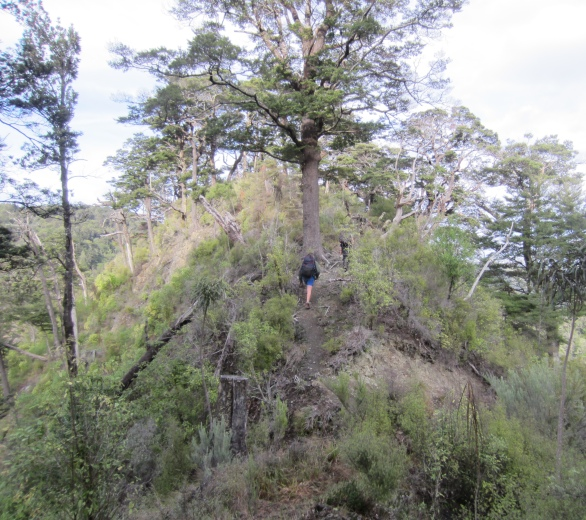 Lovely foresty ridge